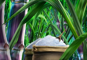 Food_illustrations_3127_sugar_and_sugarcane_picture